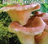 Семена мицелий грибов Вешенка рожковидная 10шт