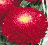 Семена Астры Помпонная Серенада (0,3г)