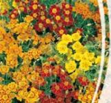 Семена Бархатцев мексиканских смесь (0,2г)
