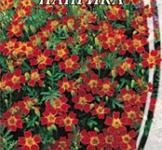 Семена Бархатцев мексиканских Паприка (0,1г)