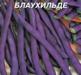 Семена фасоли спаржевой Блаухильде 20г