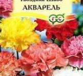 Семена Гвоздики Шабо Акварель (0,1г)