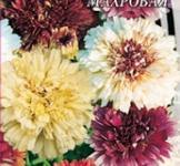 Семена Хризантемы килеватой махровой (0,3г)