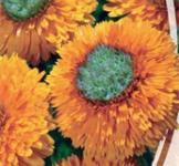 Семена Календулы Сердце оранжевое (1г)