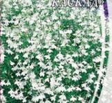 Семена Лобелии ампельной Белоснежный каскад (0,1г)