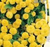 Семена Ромашки девичьей Солнечный шар (0,1г)