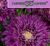Семена Астры Си Старлет фиолетовая (0,1г)