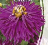 Семена Циннии Кактусоцветной сиреневой (0,3г)