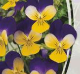 Семена Виола Рогатая Хелен 0,1г