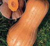 Семена тыквы Виолина 10г (Коуел Италия)