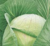 Семена капусты белокочанной Ярославна 1г