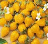 Семена земляники Желтое чудо 0,1г
