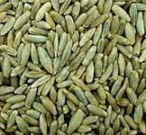 Семена ржи на сидерат  1кг