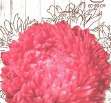 Семена Астра пионовидная Роза Турм 0,25г