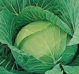 Семена капусты белокочанной Золотой гектар (рс) 1г