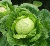 Семена капусты белокачанной Золотой гектар 0,5кг