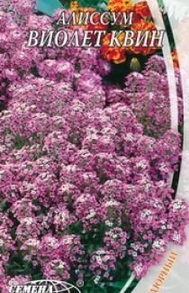 Насіння Лобулярії Віолет Квін (0,3г)