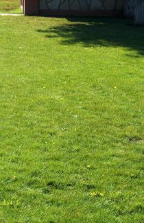 Насіння трави Универсальна суміш 0,8 кг