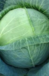 Насіння капусти білоголової Бірюза 0,5кг
