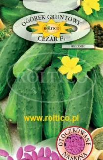 Насіння огірка Цезар 50шт (Roltiko Польща)