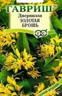 Насіння Дієрвіла Сидячеквіткова Золота Брошь 5 шт