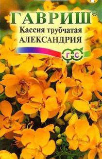 Насіння Кассія Олександрія 3шт