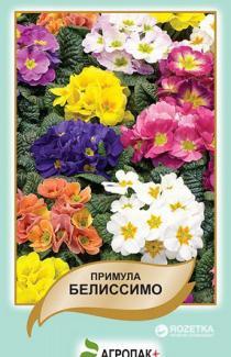 Насіння Примула Беліссімо 50шт (Legutko Польща)