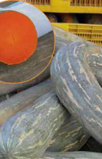 Насіння гарбуза Лунга Пієна Ді Наполі 10г (Коуел Італія)