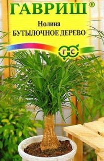 Насіння  Ноліна  Бутилочне   дерево  3 шт
