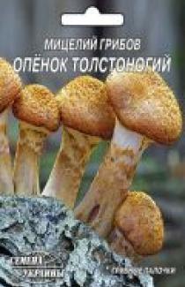 Насіння міцелій грибів Опеньок товстоногий 10шт
