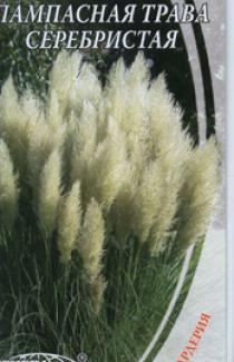Насіння Пампасна Трава Серебриста 0,1г
