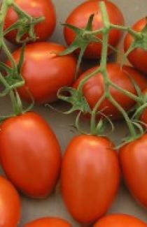 Насіння помідора Рома 0,5кг