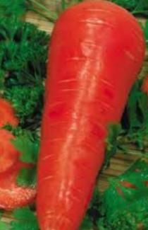 Насіння моркви Флакке GSN Semences 500г
