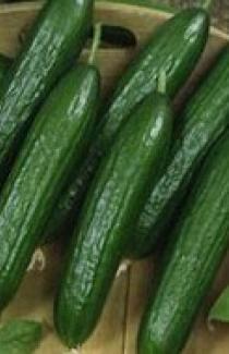Насіння огірків салатний SX-116 F1 Satimex 250 шт