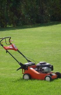 Насіння газонної трави Спортивна суміш 0,8 кг