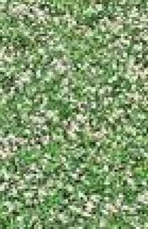 Травосмесь сенокосная 1кг