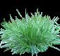 Семена трав, лекарственных, сидератов, кормовых и других растений