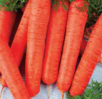 Насіння моркви Лонг роте Штумпфе 100г (Коуел Німеччина)