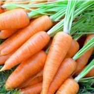 Насіння моркви Карлена 0,5кг