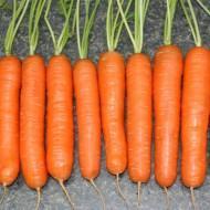 Насіння моркви Натофі 0,5кг