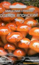 Семена мицелий грибов Опенок японский 10шт