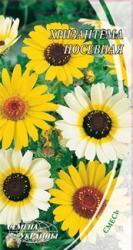 Насіння Хризантеми посівної (0,5г)