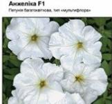 Насіння Петунії Анжеліка F1 10шт (Cerny Чехія)