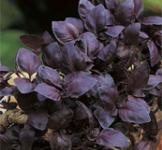 Насіння базиліка фіолетового Опал 0,3г