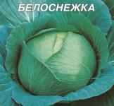 Насіння капусти білоголової Білосніжка (пс) 10г