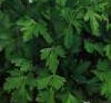Насіння петрушки листової Бісер 2,0 г (ТМ Гавриш)