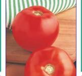 Насіння помідора Бобкат F1 10шт (Syngenta Нідерланди)