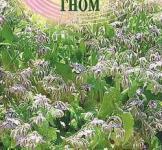 Насіння бораго Гном ( огіркова трава) ТМ «Гавриш» (0,3 г)