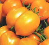 Насіння помідора Диво світу 0,2г