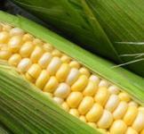 Насіння кукурудзи Дніпровський 3000шт
